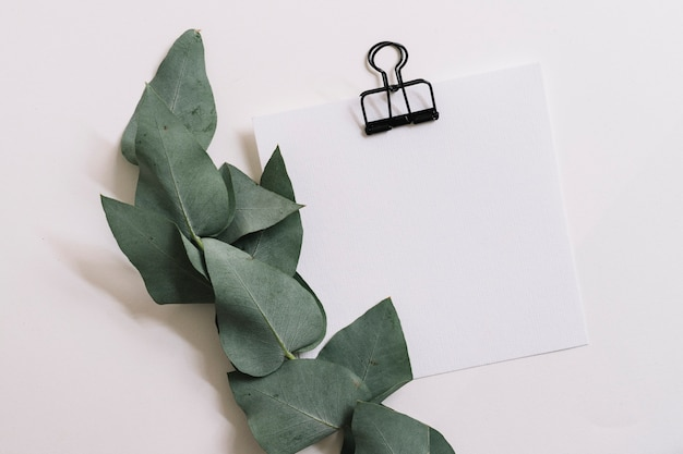 Green leave twig with paper attach with bulldog clip on white backdrop