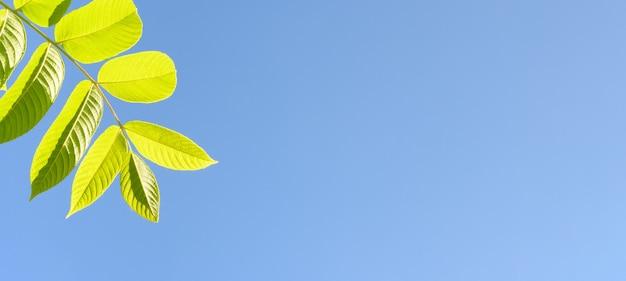 복사 공간이 있는 푸른 하늘을 배경으로 하는 녹색 잎
