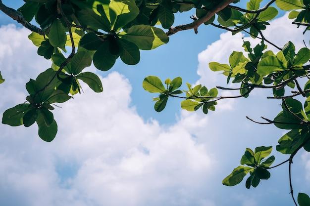 空と白い雲に対する緑の葉テキスト用のコピースペース