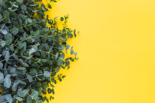 Green leaves against yellow backdrop