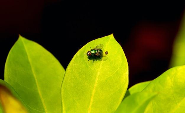 녹색 잎과 야생 파리, 선택된 초점
