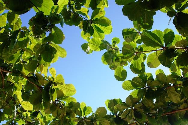 Зеленые листья и голубое небо