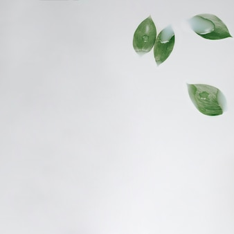 Green leaves and copyspace