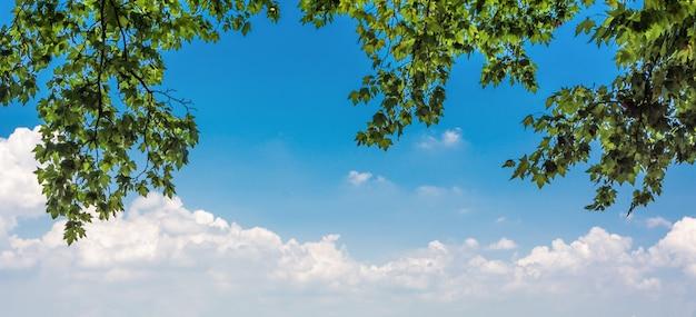 Зеленые листья и солнце Бесплатные Фотографии