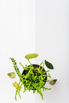 Green leaves around potted plant