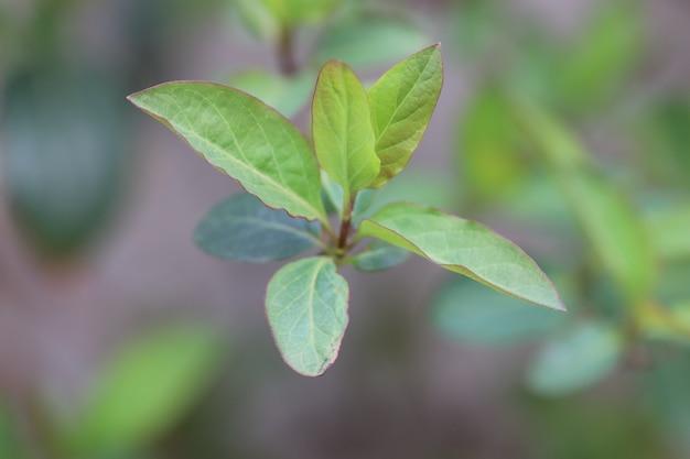 배경으로 녹색 잎 봄에 어린 녹색 잎