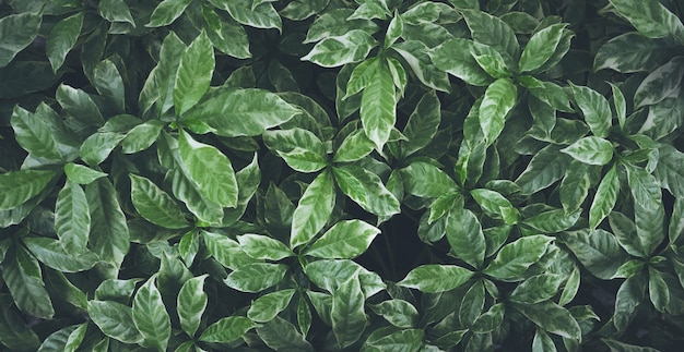 Зеленые листья фон дизайн. плоская планировка. вид сверху листьев. природа концепции
