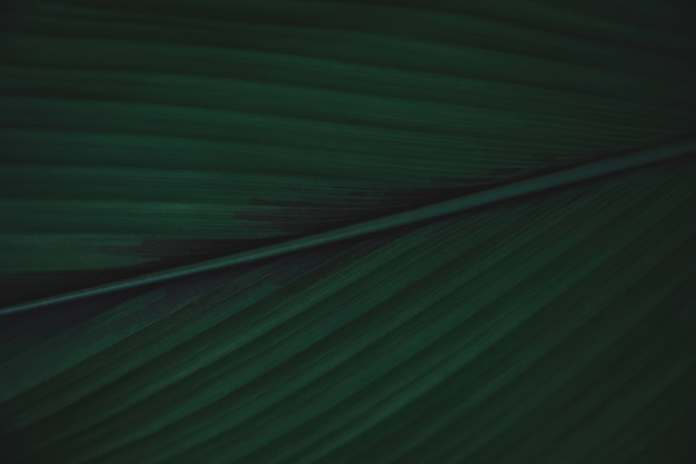 Green leaves background. flat lay. nature dark green tone background