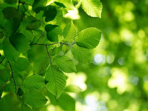 緑は晴れた日に背景を残します