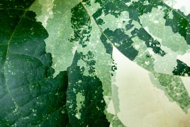 緑の葉の背景。葉のテクスチャ