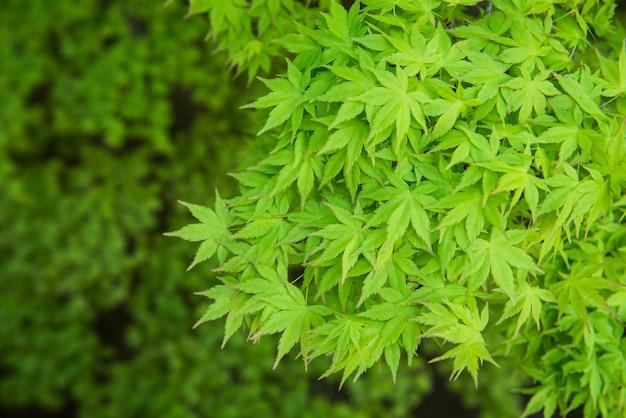녹색 잎 배경입니다. 정원의 자연 벽지와 질감.