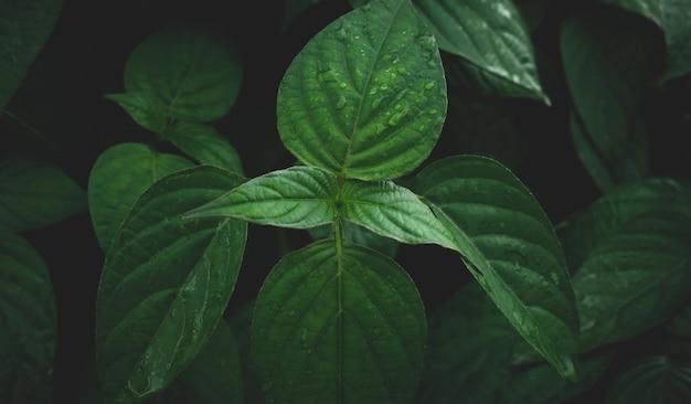 緑の葉背景の自然暗いトーンで