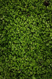 Green leaves background. nature plants wallpaper. top view
