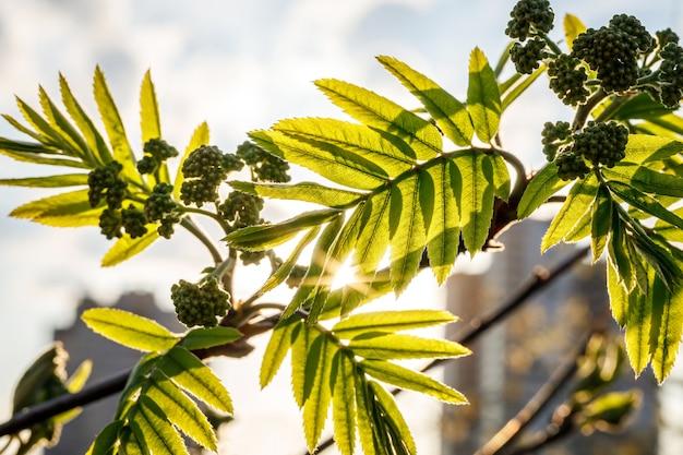 일몰에 녹색 잎 배경입니다.