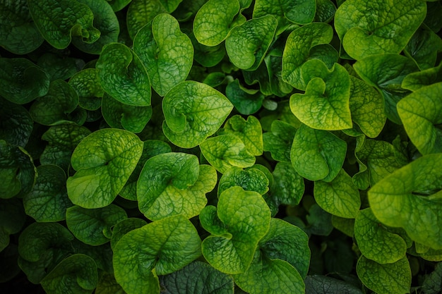 Green leaves background. plants one tone photograph. nature pattern concept. copyspace, place for your text.