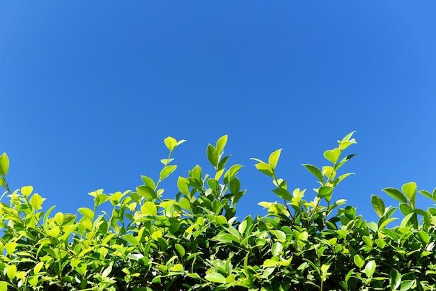푸른 하늘 또는 자연 벽 질감, 녹색 잎 사각형 프레임 녹색 잎 배경