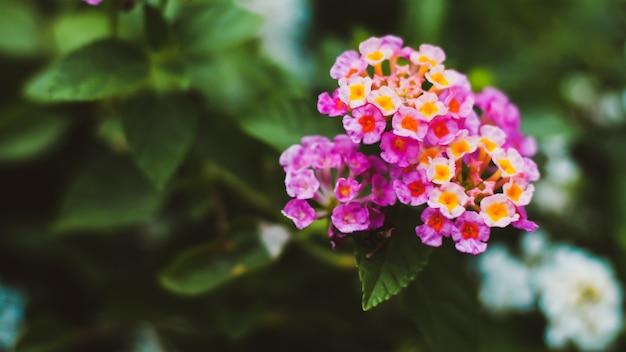 緑の葉の背景に小さな小さなピンクの花。