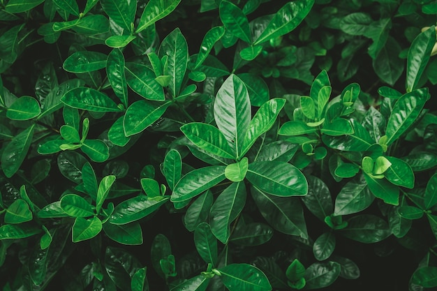 Green leaves background with vintage filter
