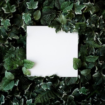 Green leaves background with white paper frame