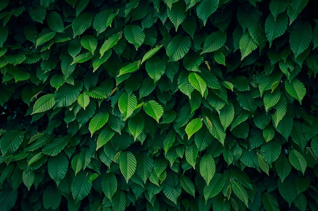 Зеленые листья фон