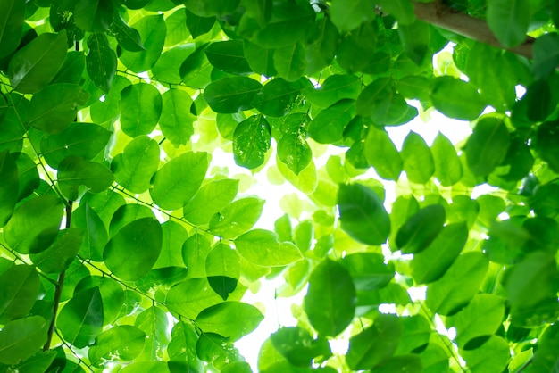 Green leaves, beautiful nature are growing.