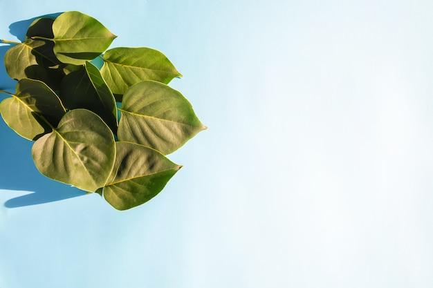 Green leaves on blue pastel background in sunlight. summer card, poster, banner design.