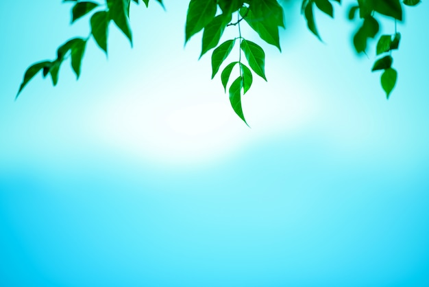 Green leaves on blue