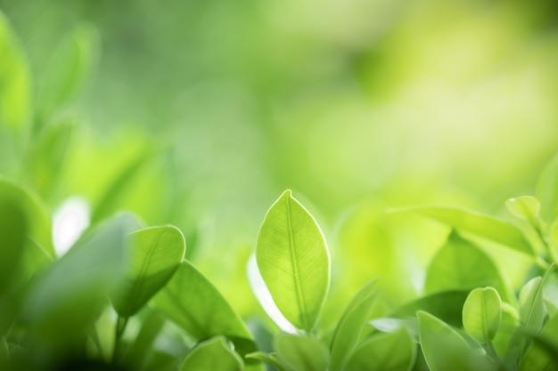 Green leaves on blurred greenery tree background