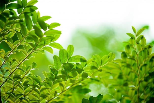Green leaves on bokeh nature
