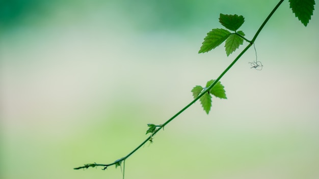 Green leaves on branch