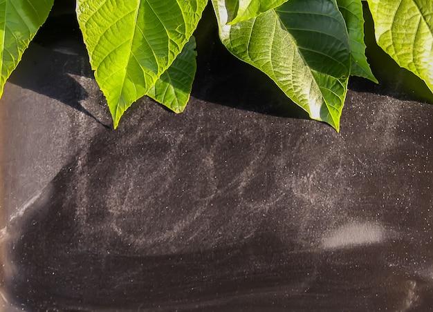 Green leaves on chalkboard in sunlight on soft blue pastel background. summer design.