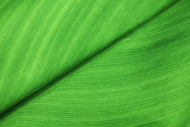 Зеленые листья крупным планом текстуры фона