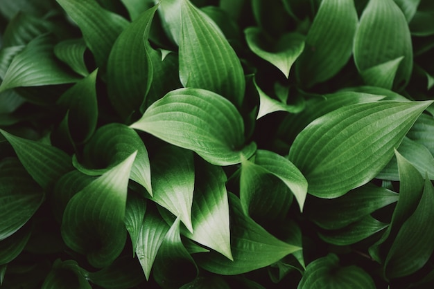 Green leaves close-up. tropical leaf top view