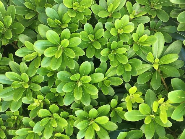 緑の葉がクローズアップ