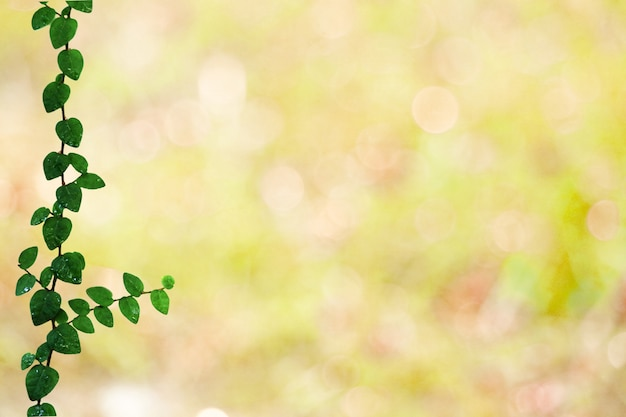 Green leaves of coatbuttons nature border and blur yellow bokeh background