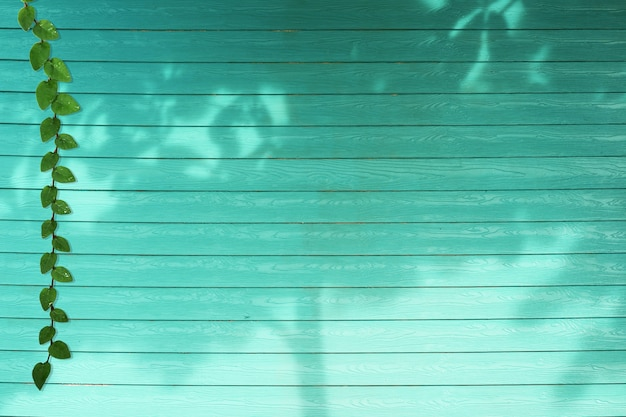 Green leaves of coatbuttons nature border and shadow plant tree on aqua color wood