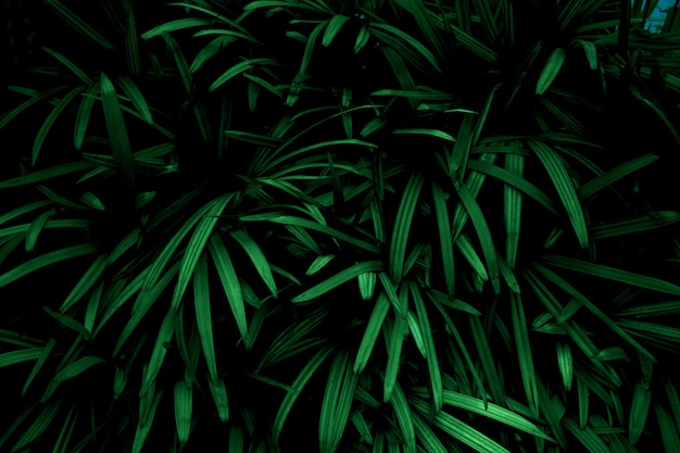 Green leaves color tone dark  in the morning.environment,photo concept nature and plant.