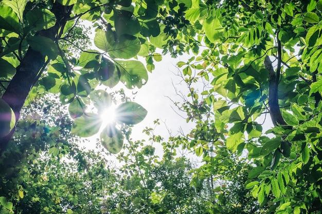 緑の葉が森で日光に覆われて Premium写真