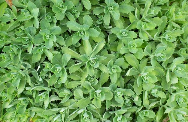 緑の葉パターンの背景と壁紙の創造的なモックアップの葉