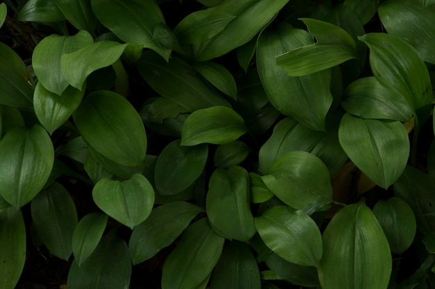 Green leaves in dark tone background