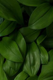 Green leaves in dark tone background