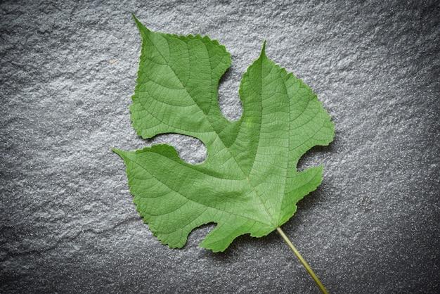 Green leaves on dark