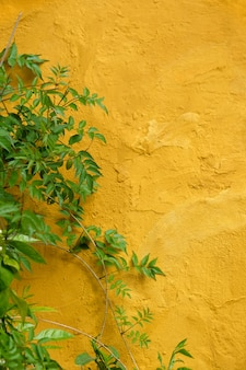 Green leaves decorating on yellow wall in the old town of marbel