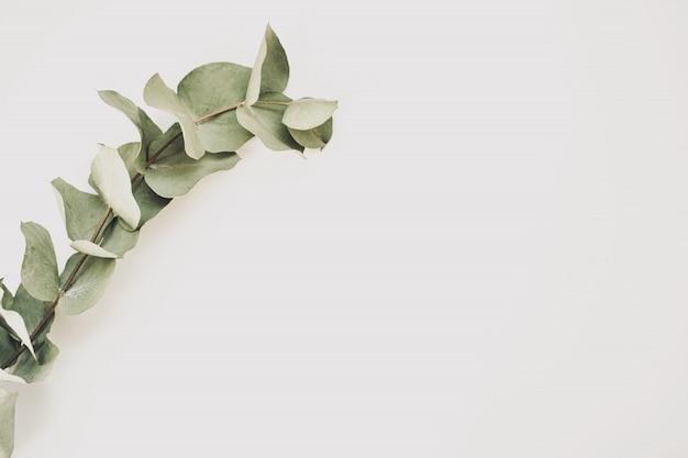 緑の葉は、白い背景で隔離のユーカリ。上面図。スペースをコピーします。