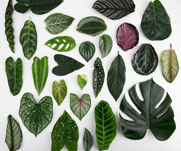녹색 잎 평면 누워 배경