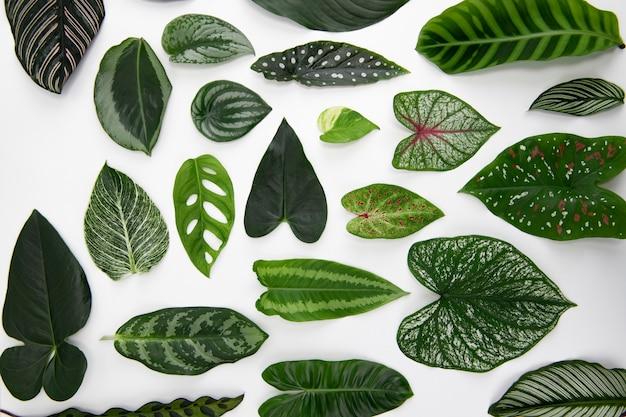 Sfondo piatto di foglie verdi