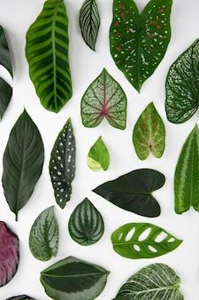 緑の葉フラットレイ背景