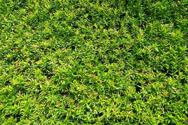 배경에 대 한 녹색 잎입니다. 아름 다운 녹색 잎, 에코 개념.