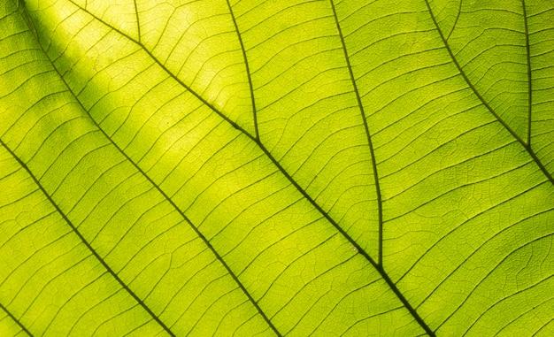 背景の緑の葉
