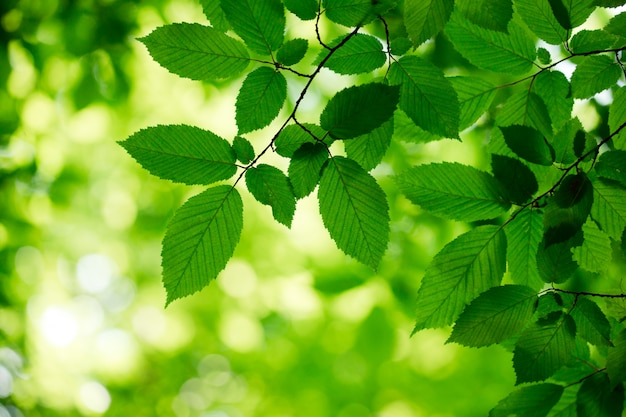 Green leaves on the forest